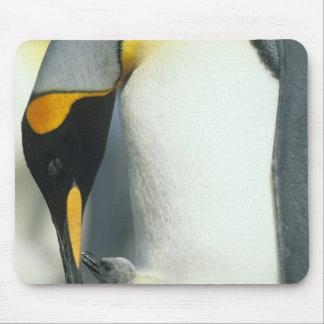 King Penguin, (Aptenodytes patagonicus), Mouse Pad