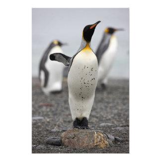 King Penguin Aptenodytes patagonicus) on Art Photo