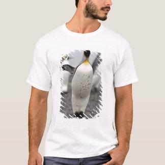 King Penguin Aptenodytes patagonicus) on T-Shirt