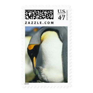 King Penguin, (Aptenodytes patagonicus), Postage
