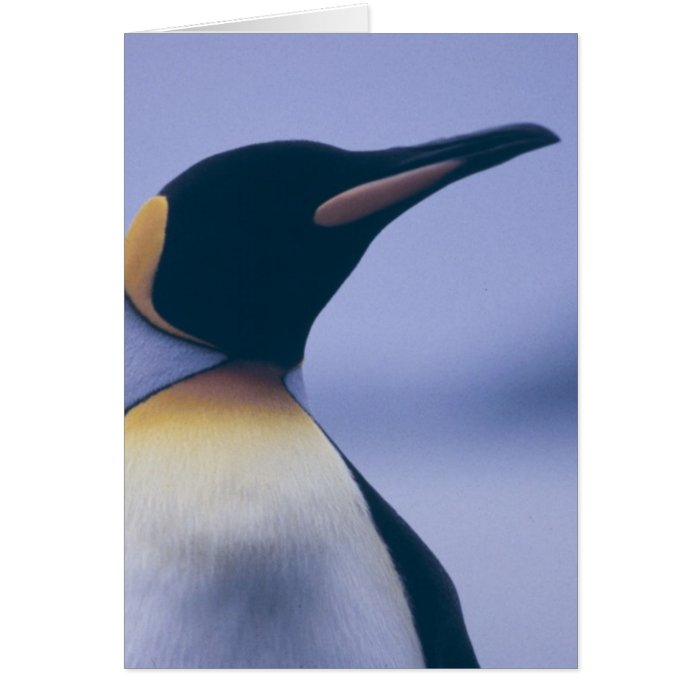King Penguin Card