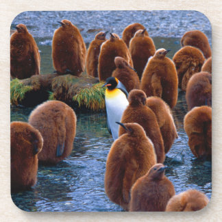 King Penguin Chicks with Adult - beverage coaster