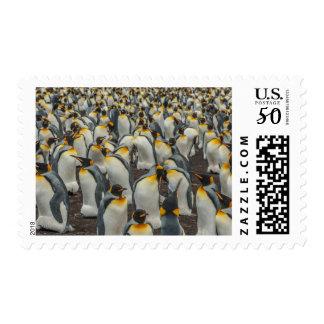 King penguin colony, Falklands Postage