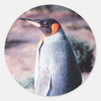 King Penguin on Heard Island Classic Round Sticker