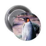 King Penguin on Heard Island Pins