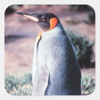 King Penguin on Heard Island Square Sticker