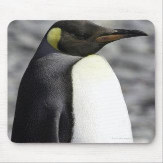 King Penguin, Salisbury Plain, South Georgia Mouse Pad