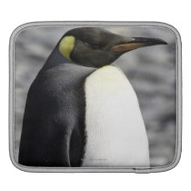King Penguin, Salisbury Plain, South Georgia Sleeve For iPads