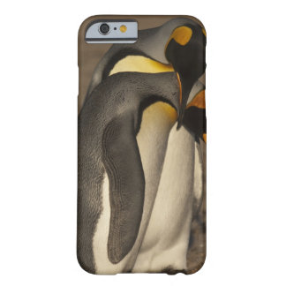 King Penguins (Aptenodytes p. patagonica) Barely There iPhone 6 Case