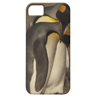 King Penguins (Aptenodytes p. patagonica) iPhone SE/5/5s Case