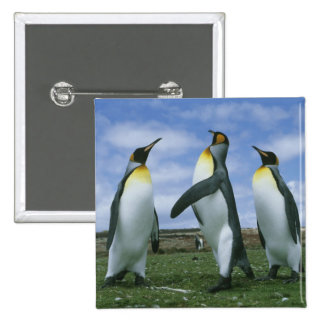 King Penguins, Aptenodytes patagonicus), 2 Inch Square Button