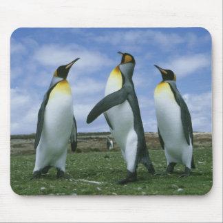 King Penguins, Aptenodytes patagonicus), Mouse Pad