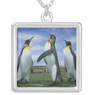 King Penguins, Aptenodytes patagonicus), Necklaces