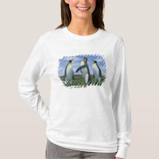 King Penguins, Aptenodytes patagonicus), T-Shirt