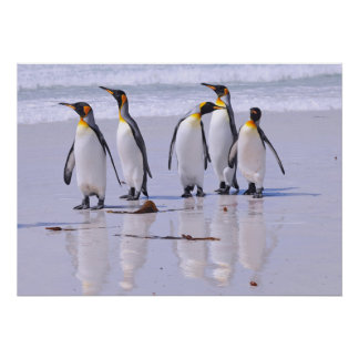 King Penguins at Beach Poster