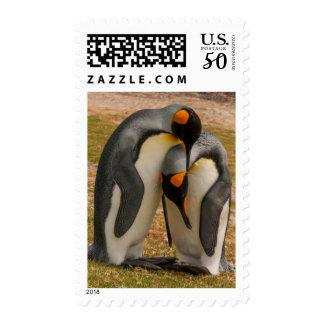 King penguins caressing, Falkland Postage