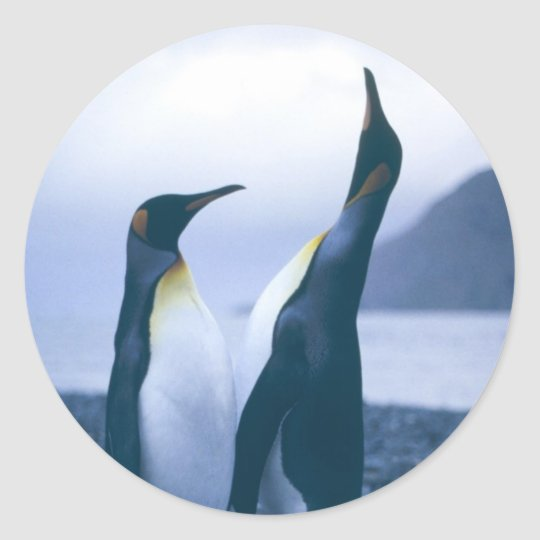 King Penguins Classic Round Sticker