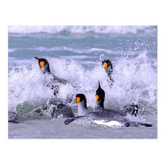 King Penguins Entering the Ocean Postcard