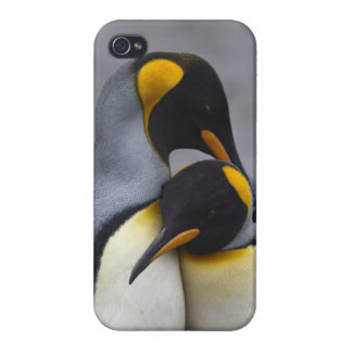 King Penguins in Love iPhone 4 Savvy Case