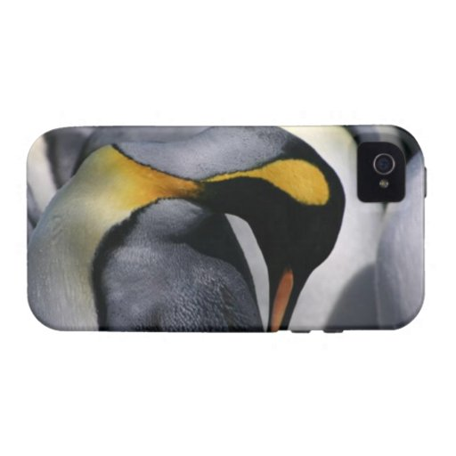 King Penguins iPhone 4 Case-Mate Vibe iPhone 4/4S Cases