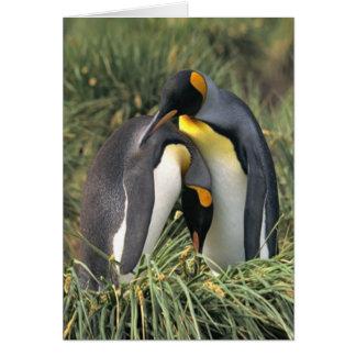 King penguins Lovers Card