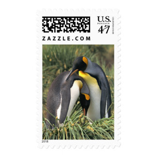 King penguins Lovers Postage