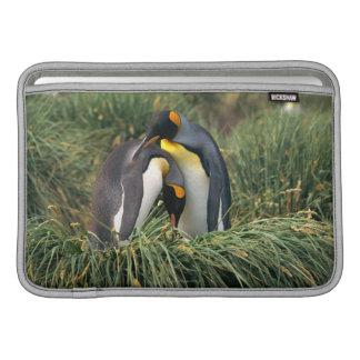 King penguins nuzzling sleeves for MacBook air