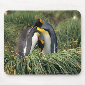 King penguins nuzzling mouse pad