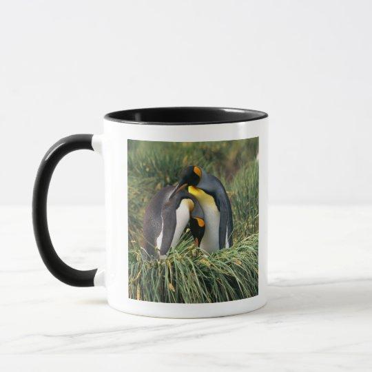 King penguins nuzzling mug