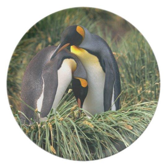 King penguins nuzzling plate