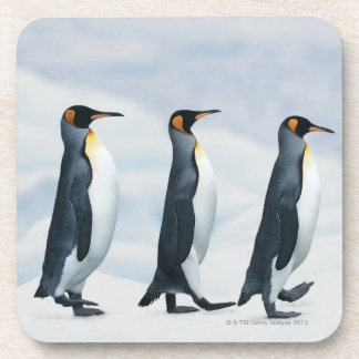 King Penguins walking in single file Beverage Coaster