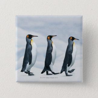 King Penguins walking in single file Pinback Button