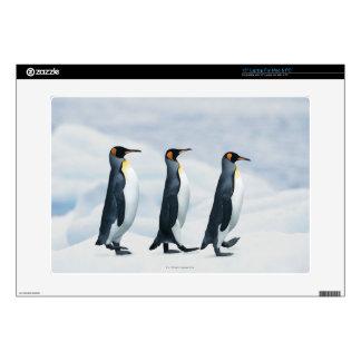King Penguins walking in single file Decal For Laptop