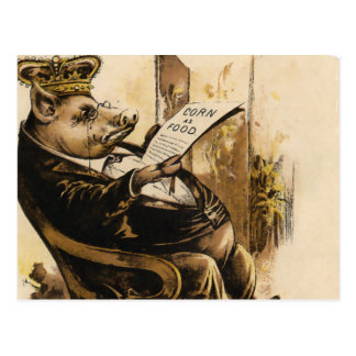 King Pig Reading His Newspaper Postcard