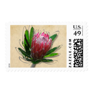 King Protea Postage Stamp