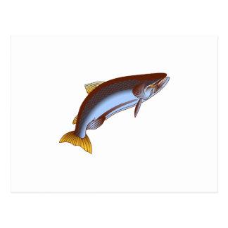 King Salmon Postcard