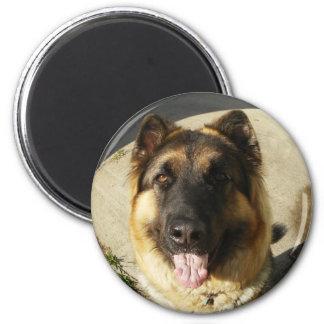 King Shepherd Magnet