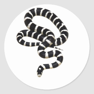 King Snake from Junglewalk.com Classic Round Sticker