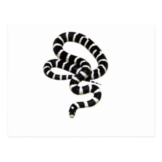 King Snake from Junglewalk.com Postcard