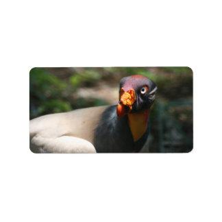King Vulture bird closeup Sarcoramphus papa Label