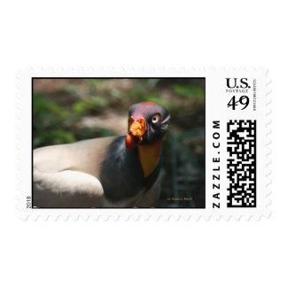 King Vulture bird closeup Sarcoramphus papa Stamps