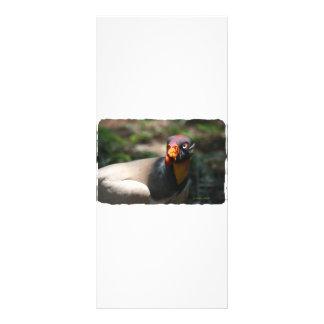 King Vulture bird closeup Sarcoramphus papa Rack Card