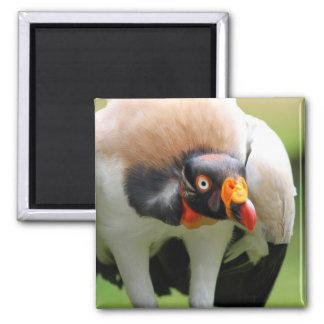 King vulture magnets
