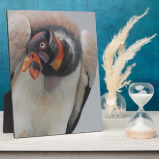 King Vulture Display Plaques