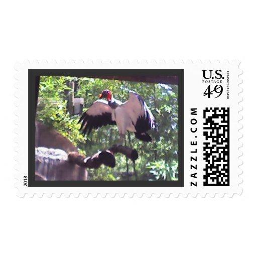 King Vulture Postage