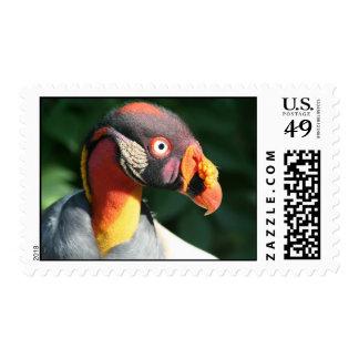 King Vulture Postage Stamp