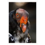 King Vulture Posters