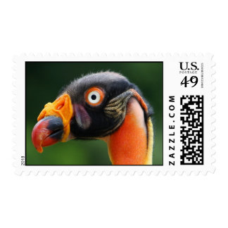King Vulture Stamps