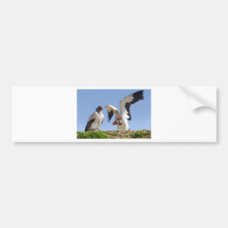 King vultures on cliff bumper sticker