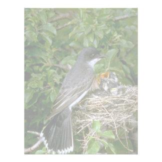 Kingbird del este con los jóvenes plantilla de membrete